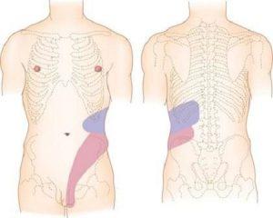 Места локализации боли при почечной колике